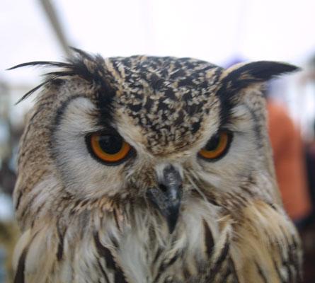 Huxley Birds of Prey